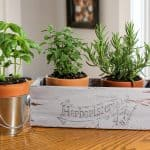 Thrift Store Box Transformed Into an Indoor Herb Garden