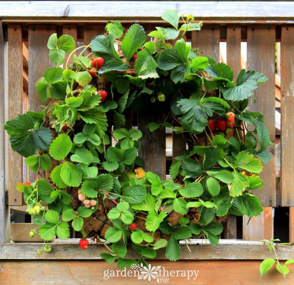 How-to-Make-a-Strawberry-Wreath